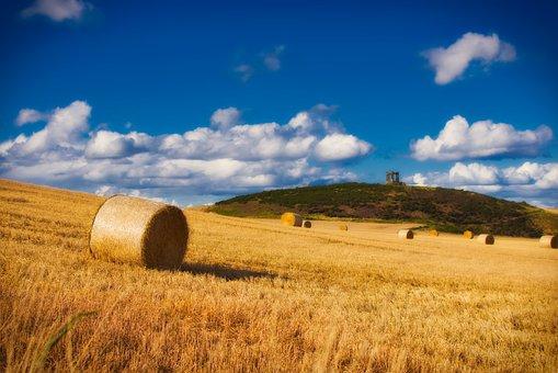 Straw Bales, Harvest, Straw, Straw Role, Sky, Landscape