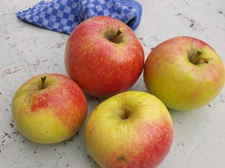 Apple, Nature, Garden, Summer, Gardening, Fruit Picking