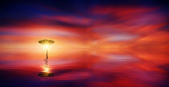 Sunset, Ocean, Tree, Sun, Light, Sea, Water, Sky
