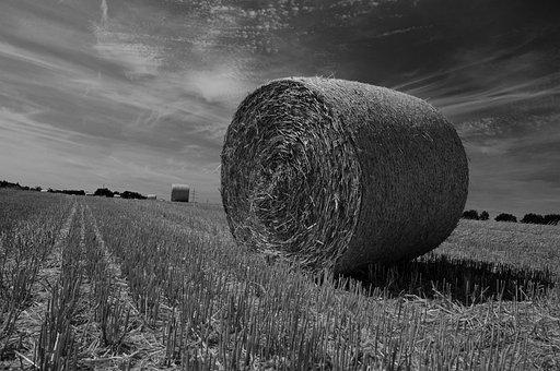 Hay Bales, Straw, Straw Bales, Black White, Sw