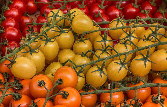 Yellow, Tomato, Tomatoes, Food, Red, Healthy, Fresh