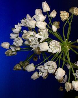 Small Flowers, White, Flowers, Flower, Plant, Garden