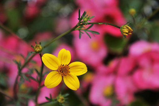 In The Garden, Yellow, Flowers, Garden, Nature, Park