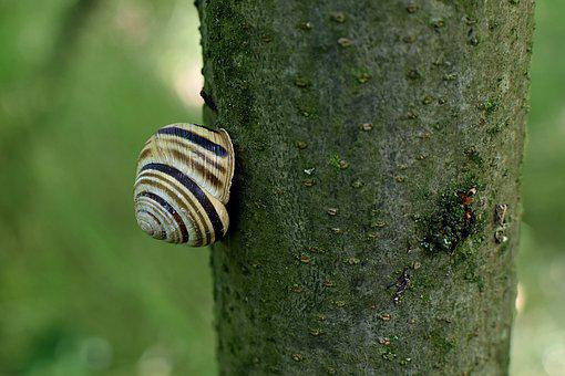 Snail, Nature, Animal, Snail Shell, Invertebrates