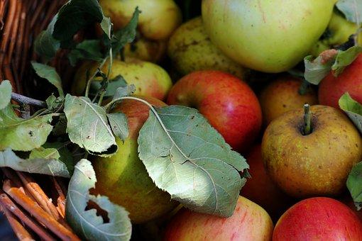 Apple, Apple Juice, Autumn, Fruit, Vitamins, When