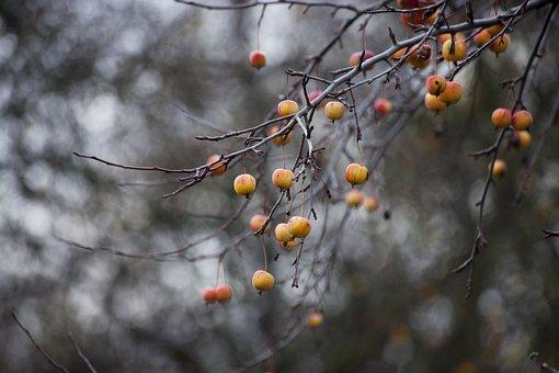 Autumn, Apple, Fruit, Apples, Nature, Tree, Garden, Red
