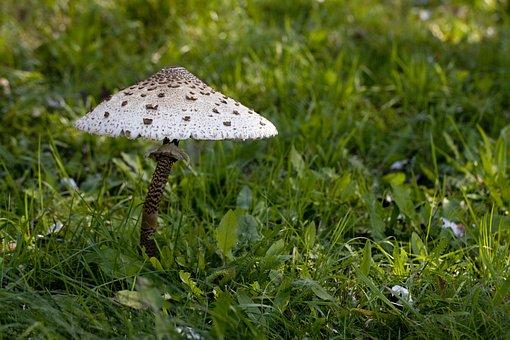 Mushroom, Mushrooms, Kite, Autumn, Forest