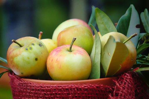 Harvest, Autumn, Apple, Leaf, Shell, Deco, Delicious