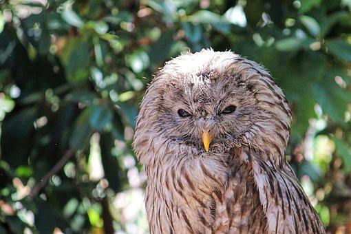 Owl, Bird Of Prey, Raptor, Animal, Plumage, Bird