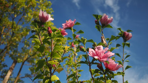Red Flowers, Blue Sky, White Cloud