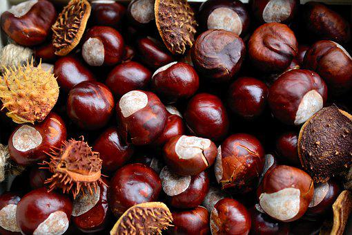 Chestnut, Horse Chestnut, Gather Chestnuts, Collect