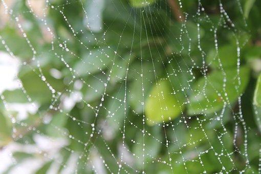 Cobweb, Dew, Drop Of Water, Autumn, Nature, Beaded