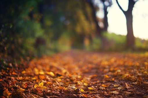 Autumn, Fall Foliage, Forest, Away, Path, Trees, Red