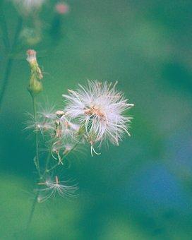 Photo By Deepika Bibin, White, Hairy, Flower
