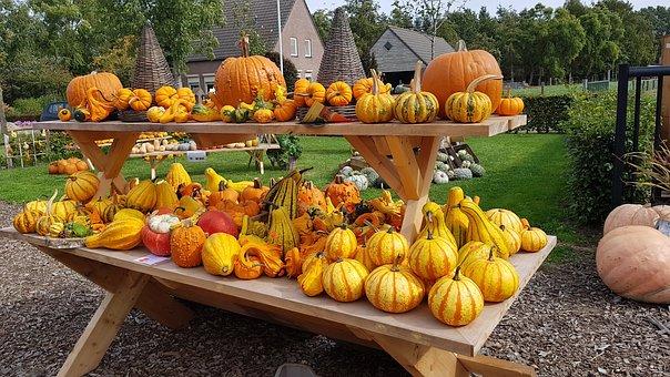 Pumpkins, Halloween, Orange, Decoration, Harvest