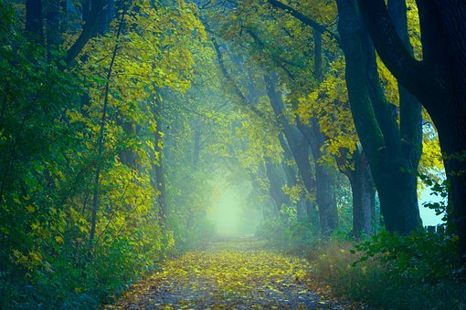 Light, Forest, Away, Path, Trees, Autumn, Green, Leaves