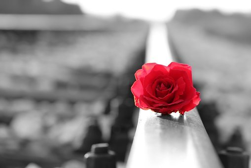 Red Rose On Rail, Black And White, Lost Love