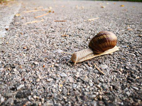 Snail, Autumn, Rest, Slowly, Road, Nature, Animal