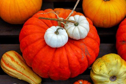 Pumpkin, Autumn, Decoration, Halloween, Harvest