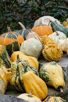 Pumpkins, Pumpkin, Ornamental Pumpkins, In The Fall