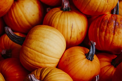 Pumpkins, Autumn, Decoration, Thanksgiving