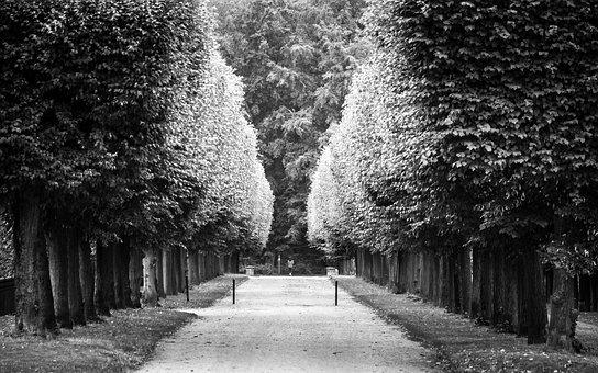 Avenue, Harmony, Balance, Symmetry, Away, Row Of Trees