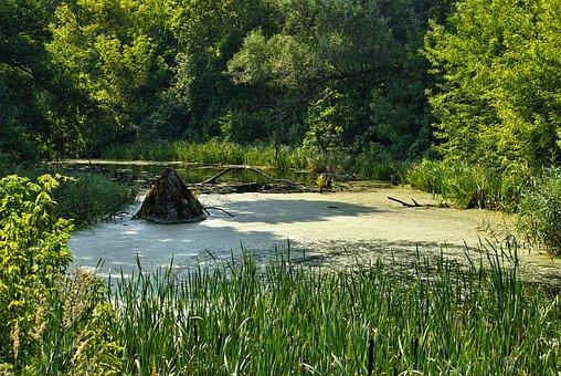 River, Marsh, Supraśl, Podlasie, Poland, Landscape