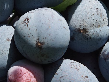 Plums, Fruit, Blue, Purple, Harvest, Fill, Thanksgiving