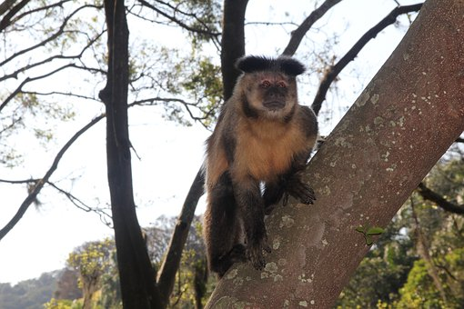 Monkey, Tree, Nature, Animal, Mammal, Primate, Wildlife