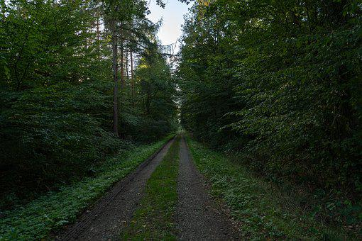 Forest Path, Forest, Nature, Away, Trees, Mystical