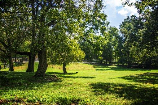 Color, Williamsburg, Virginia, Summer, Small Pasture