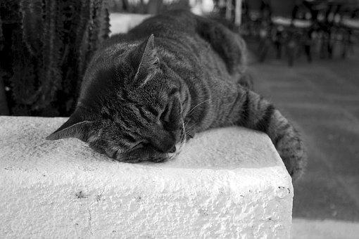Cat, Feline, Animal, Cute, Kitten, Portrait, Nature