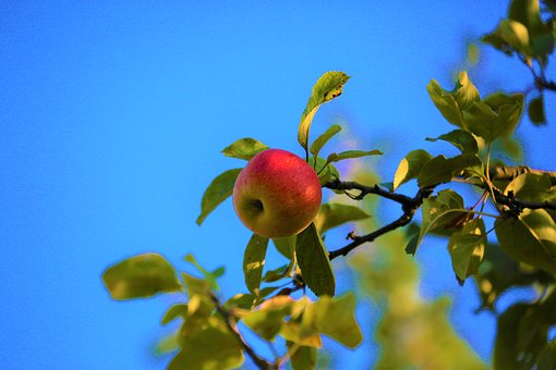 Apple, Tree, Nature, Fruit, Food, Autumn, Green, Red