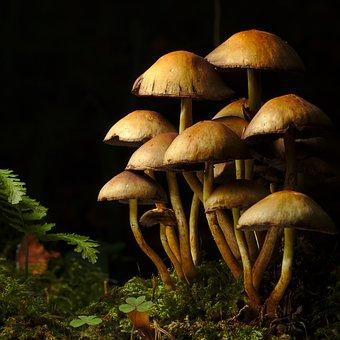 Autumn, Forest, Mushroom, Mushrooms, Fern