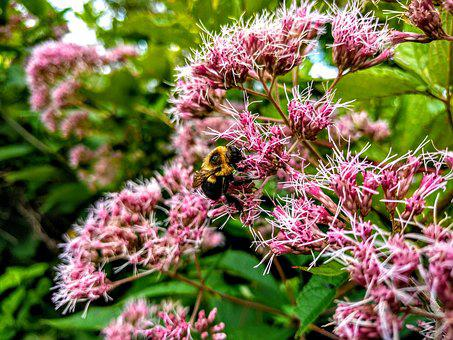 Bee, Flowers, Nature, Plant, Blossom
