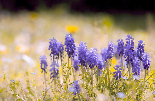 Colorful, Flowers, Botany, Petals, Nature, Green, Blue