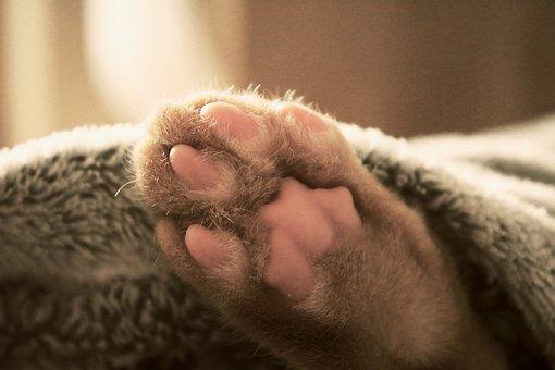 Cat, Paw, Bed, Sleeping, Pet, Animal, Feline, Domestic