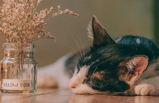 Cat, Cute, Sleep, Kitten, Pet, Feline