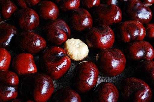 Chestnut, Nuts, Still Life, Red