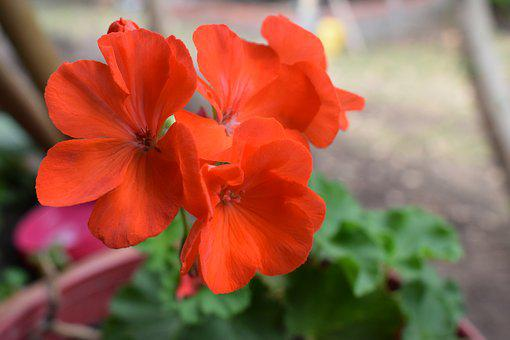 Colombia, Flowers, Petal, Garden