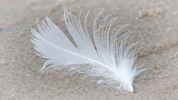 Feather, Slightly, Bird Feather, Lightweight, Fluffy