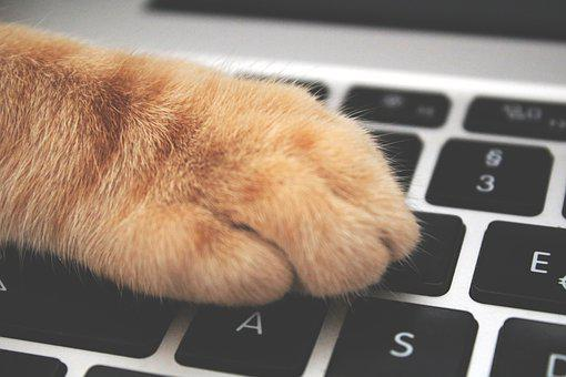 Cat, Paw, Keyboard, Playful, Nasty, Feline, Animal