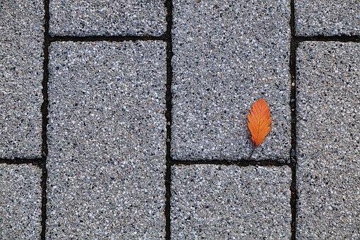 Leaf, Autumn, Still Life, Floor Plaster