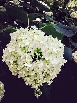 Nature, White, Flower, Green, Pretty