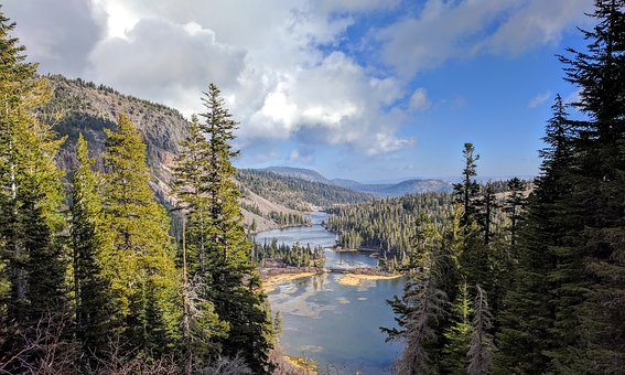 California, River, Forest, Landscape, Nature, Outdoors