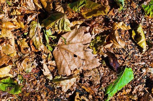 Leaves, Autumn, Nature, Tree, Fall Foliage, Forest