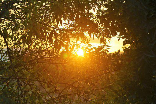 Sunset, Nature, Forest, Sky, In The Evening, Tree