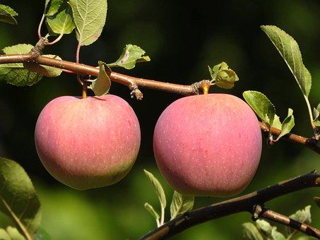 Apple, Fruit, Close Up, Autumn, Nature, Fresh, Healthy