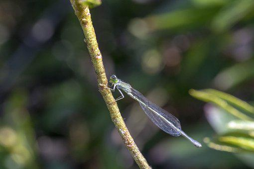 Running Needless To, Insects, Nature, Garden, Autumn