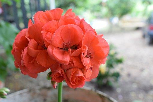 Colombia, Flowers, Petal, Garden, Plant